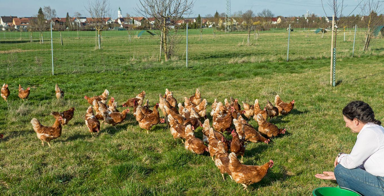 frische eier haltbarkeit